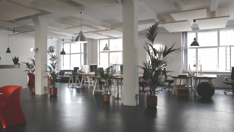 Biophilic office design using large pot plants