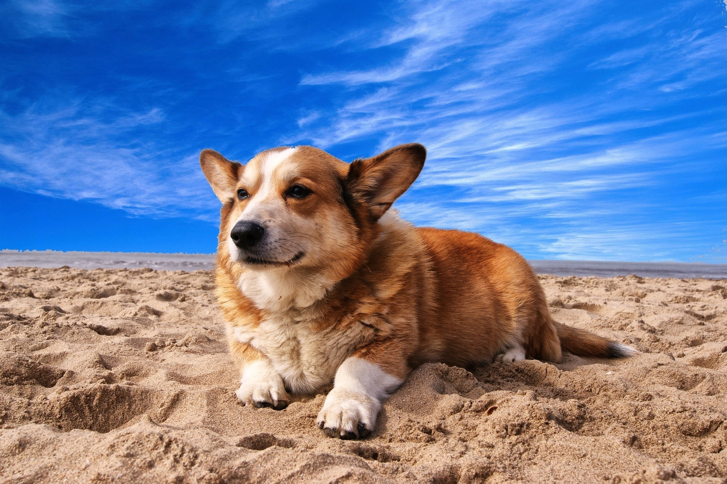 Cute Dog on a beach