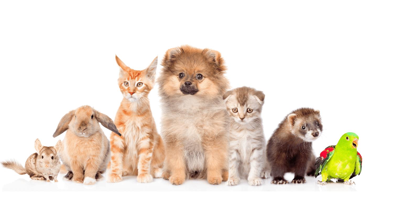 Givebutter: Monadnock Humane Society