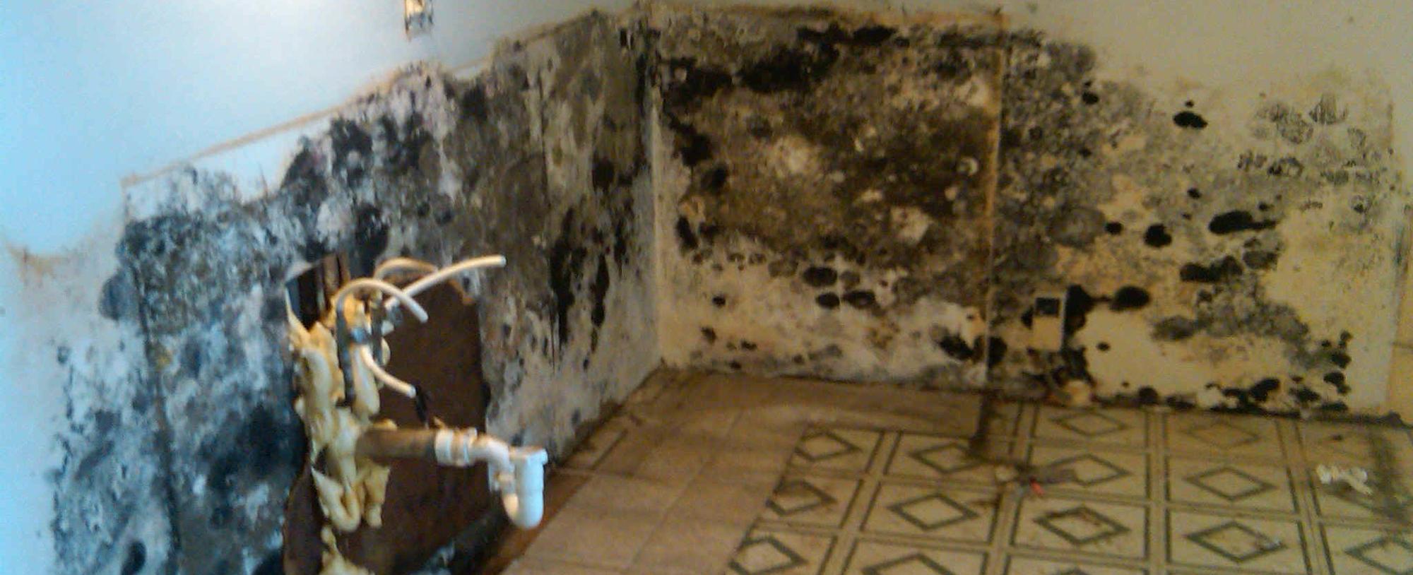 moldy home in fairbanks