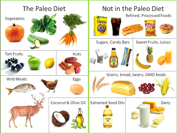 graphic showing foods allowed and not allowed in the paleo diet