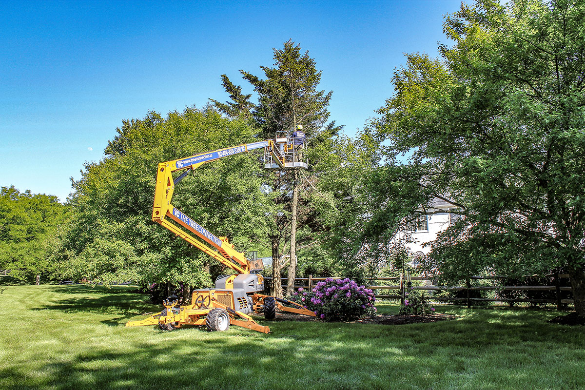 Tree Removal With Mobile Lift