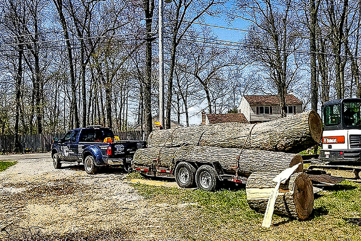 transporting large trees