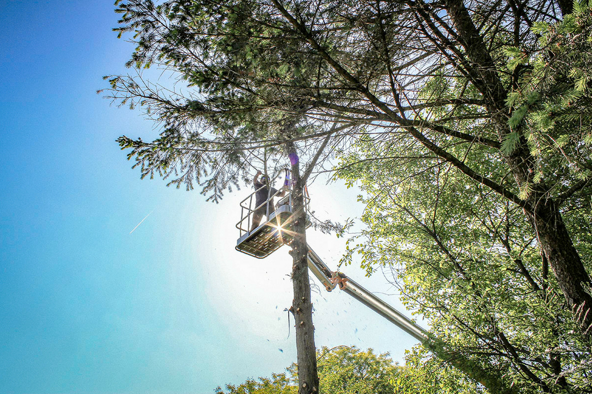 Aerial tree lift