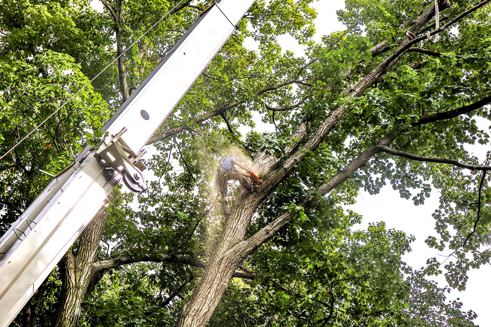 tree removal crane