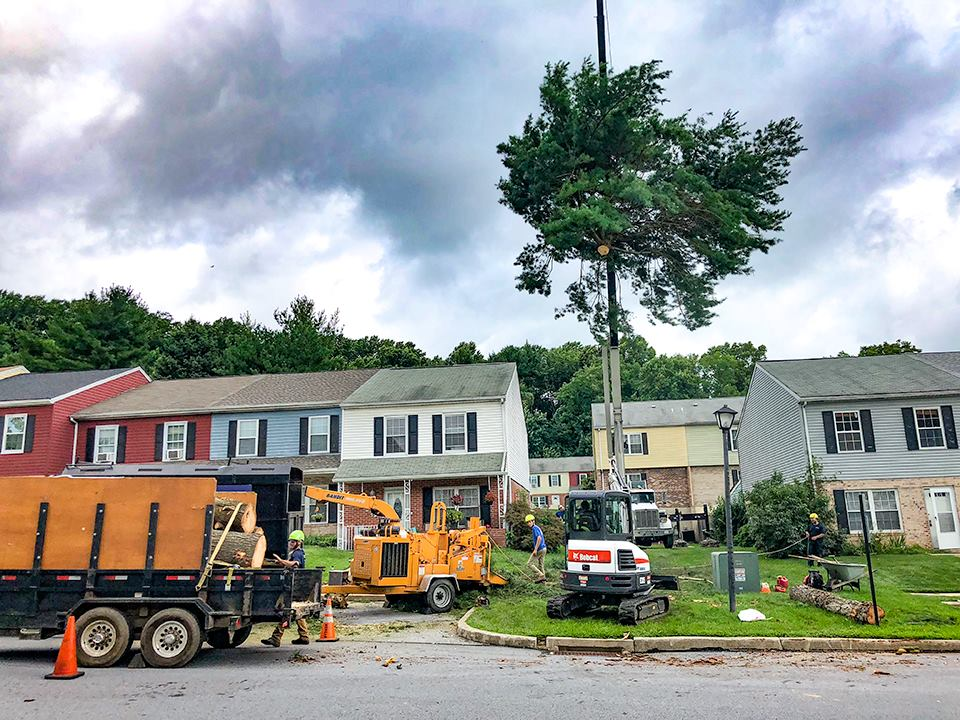crane-assisted tree removal Thorndale
