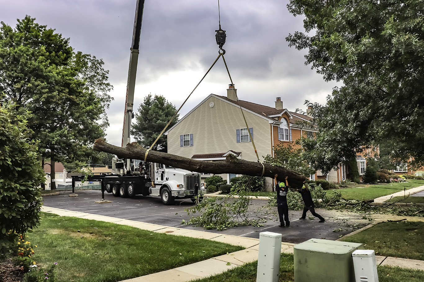 crane-assisted-tree-removal