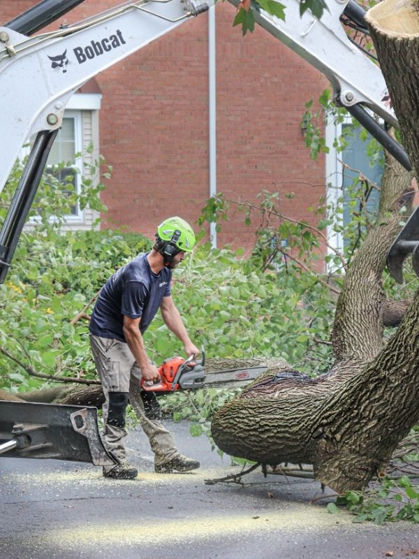 tree service worker using a chainsaw to cut tree into smaller pieces for chipping