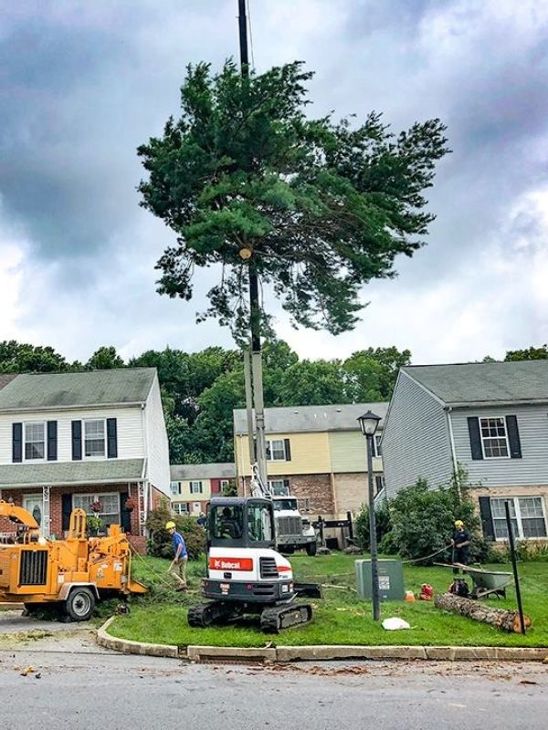 A large tree being moved by a crane in an HOA property