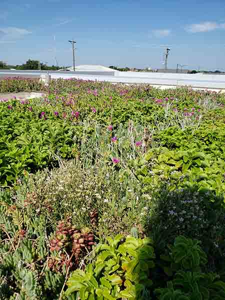 Green Roof - Living Roofs Inc - DOS Building F, CS - Public Green Roof