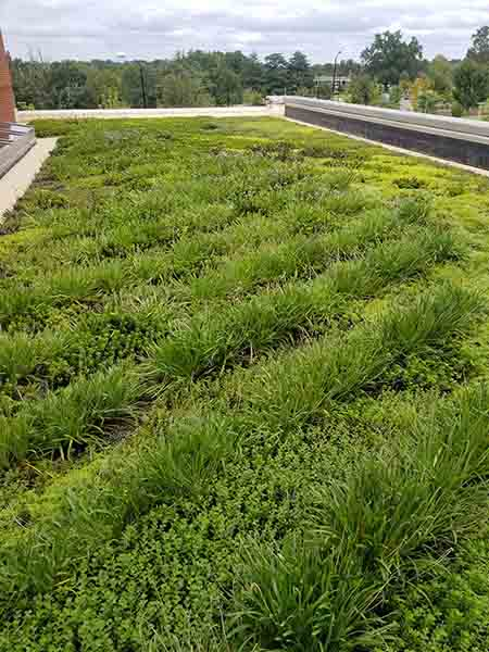Green Roof - Living Roofs Inc - New Broughton Hospital, NC - Public Green Roof