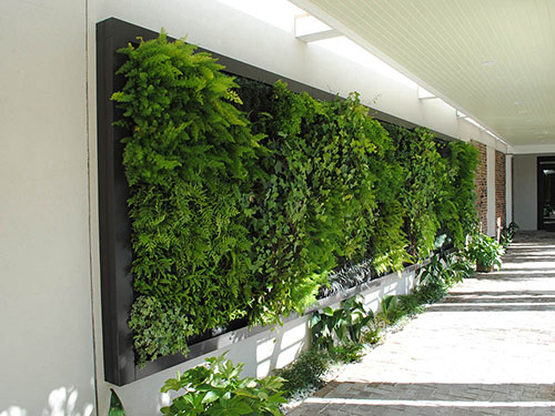 Living Wall - Living Roofs Inc - Charlestown, SC - Commercial Living Wall