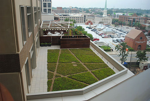 Living Roof - Living Roofs Inc - Certus Bank - Greenville, SC - Commercial Living Roof