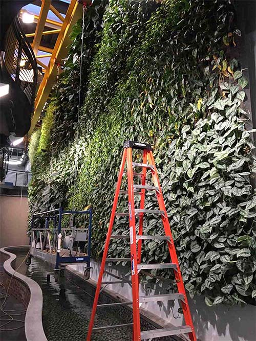 Living Wall - Living Roofs Inc - Citrix Corp - Raleigh, NC - Commercial Living Roof