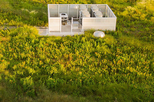 Green Roof - Living Roofs Inc - Columbia, SC - Public Green Roof