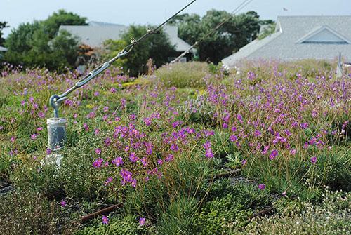 Green Roof - Living Roofs Inc - Duke OCC, NC - Public Green Roof