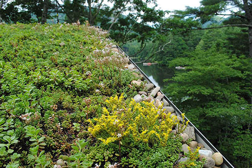 Green Roof Projects - Living Roofs, Inc. - Lake Toxaway, NC - Residential Green Roof