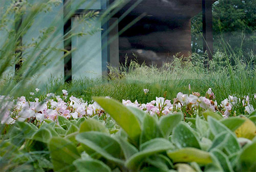 Green Roof Projects - Living Roofs, Inc. - Leicester Residence - Burnsville, NC - Residential Green Roof
