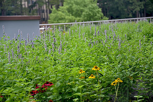Green Roof Project - Living Roofs, Inc - Durham, NC - Commercial Living Roof