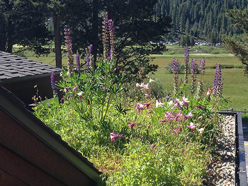Green Roof Project - Living Roofs, Inc. - Squaw Valley, CA - Residential Living Roof