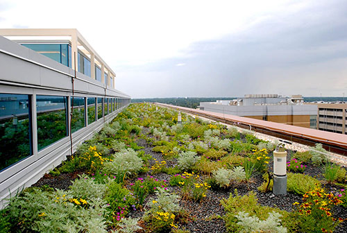 Green Roof Projects - Living Roofs, Inc. - Columbia, SC - Public Living Roof