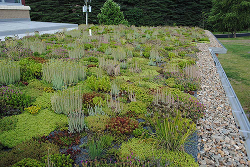 Green Roof - Living Roofs Inc - Wesley Grant Center - Asheville, NC - Public Living Roof