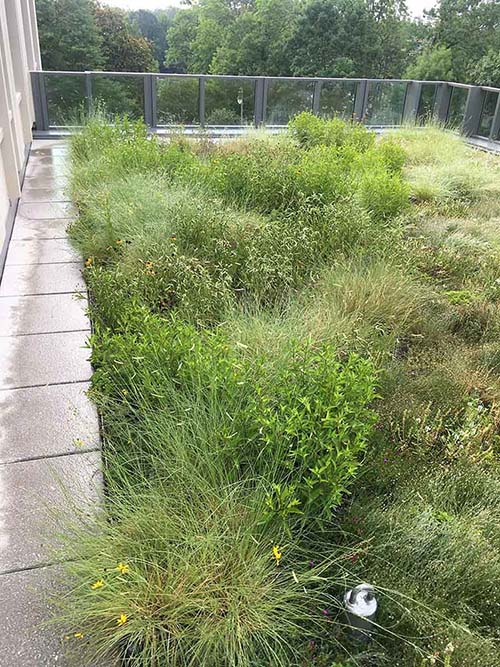 Green Roof - Living Roofs Inc - Duke PT/SON Education Building, NC - Public Green Roof