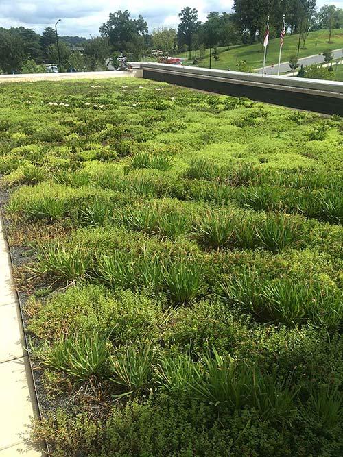 Green Roof - Living Roofs Inc - New Broughton Hospital - Morganton, NC - Public Green Roof