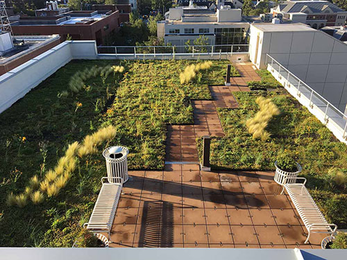 Green Roof - Living Roofs Inc - NHC 320 Chestnut St, NC - Public Green Roof