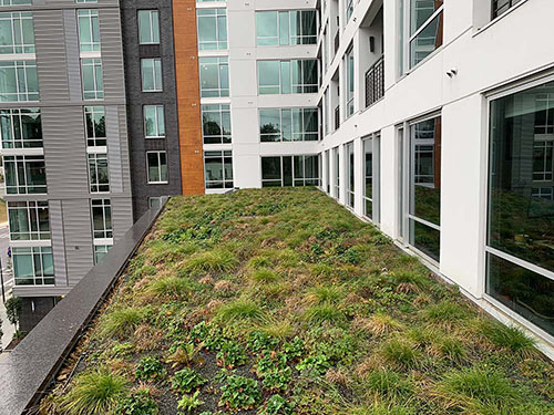 Green Roof - Living Roofs Inc - Peace and West, NC - Public Green Roof