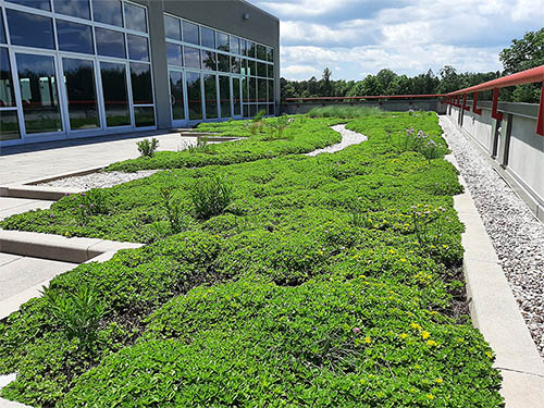 Green Roof - Living Roofs Inc - SEW Eurodrive, SC - Commercial Green Roof