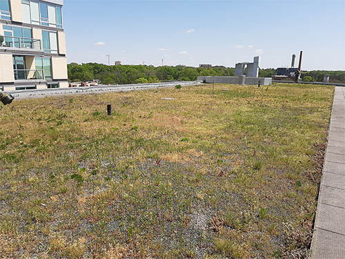Green Roof - Living Roofs Inc - Chapel Hill, NC - Residential Green Roof