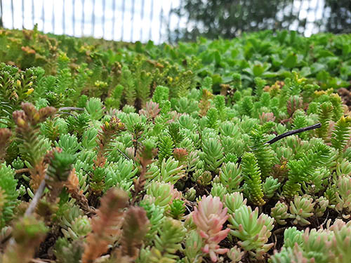 Green Roof Project - Living Roofs, Inc - Brevard Residential Green Roof - Brevard, NC