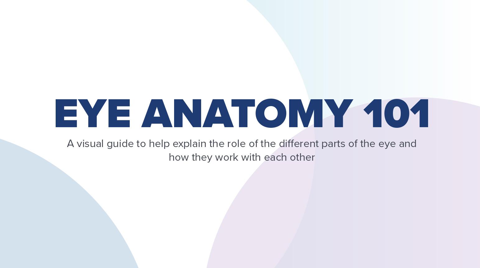 Eye Anatomy 101 (Infographic)