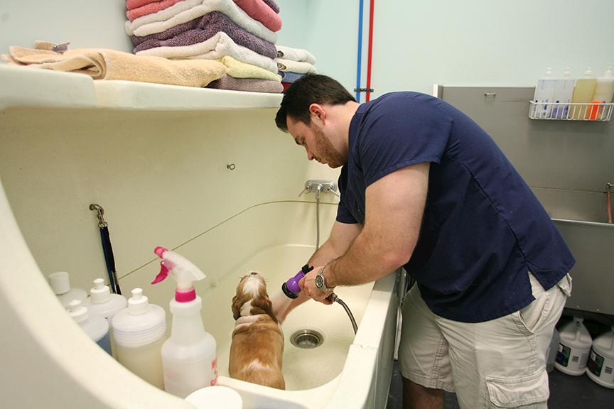 Grooming