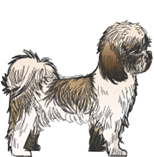 Example of Small Dog
