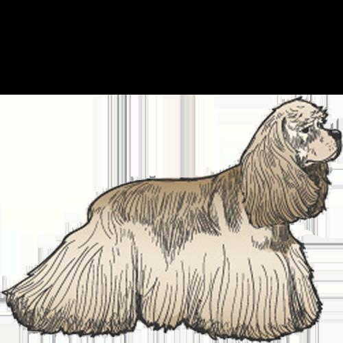 Example of Medium Dog