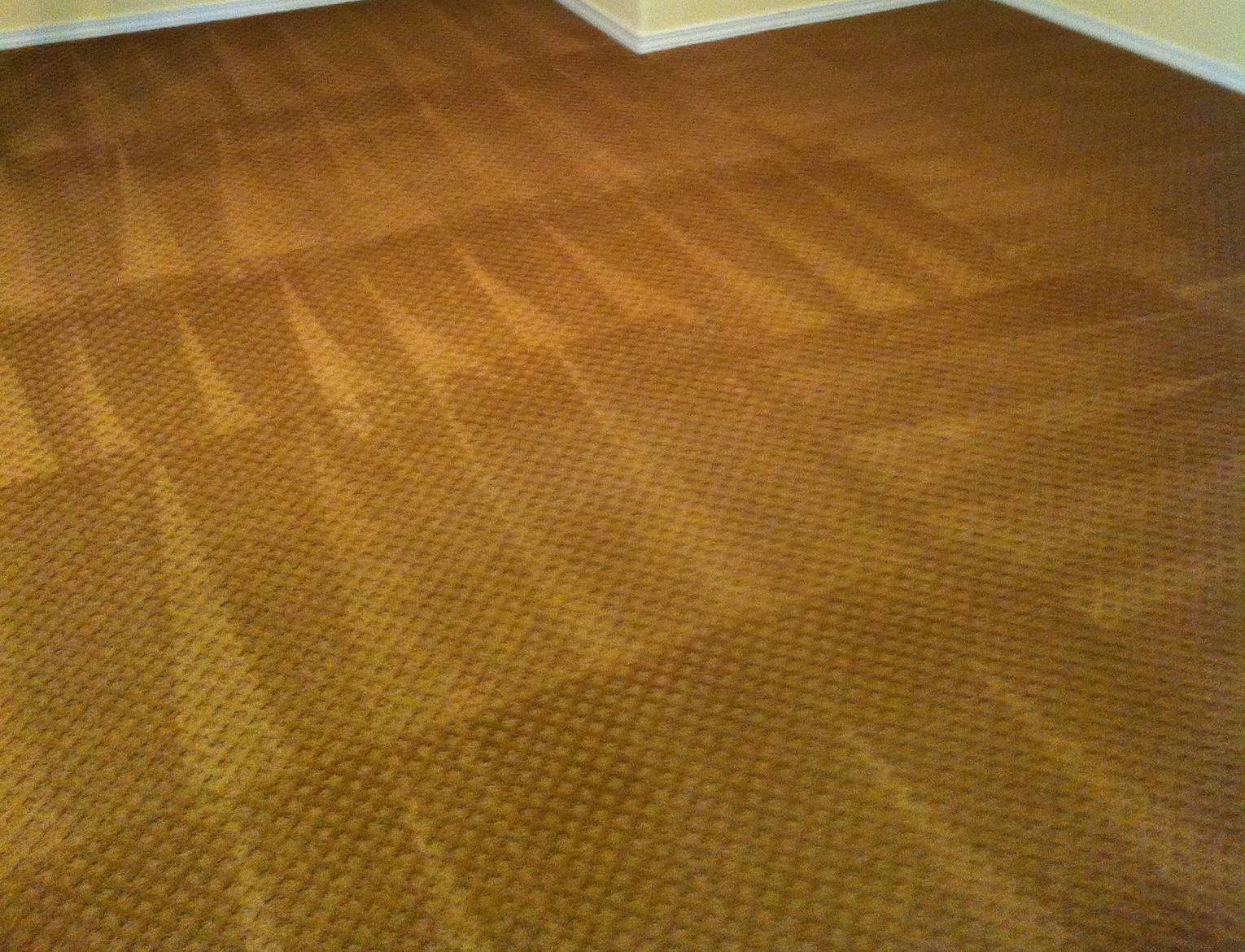 carpet cleaning project by northwest carpet cleaning project 2 ...