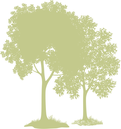 Mohawk Lumber Produces the Finest in Appalachian Hardwoods
