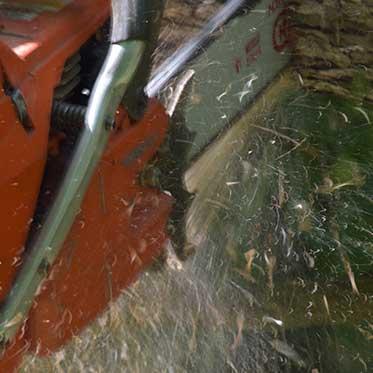 Mohawk Lumber - Forest Management in Applecreek Ohio