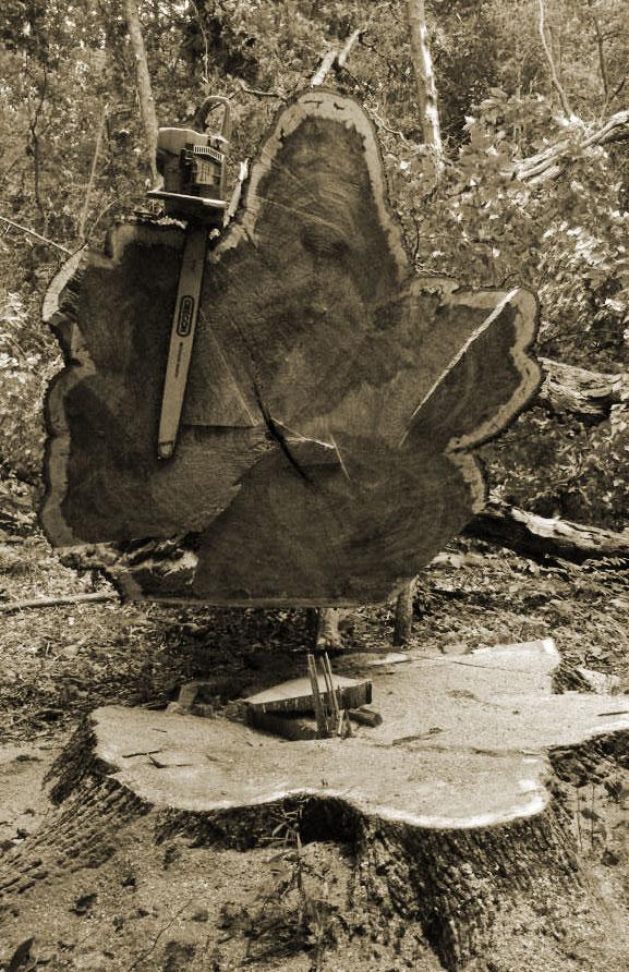 Mohawk Lumber - We Buy Trees For Cash!