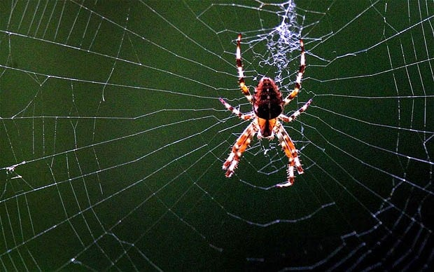 spider control and prevention in windsor