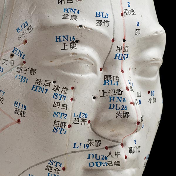 Chinese medical manikin used for Chinese Herbal Medicine Training  Illustrates key points on the human face that are used in the Chinese healing tradition