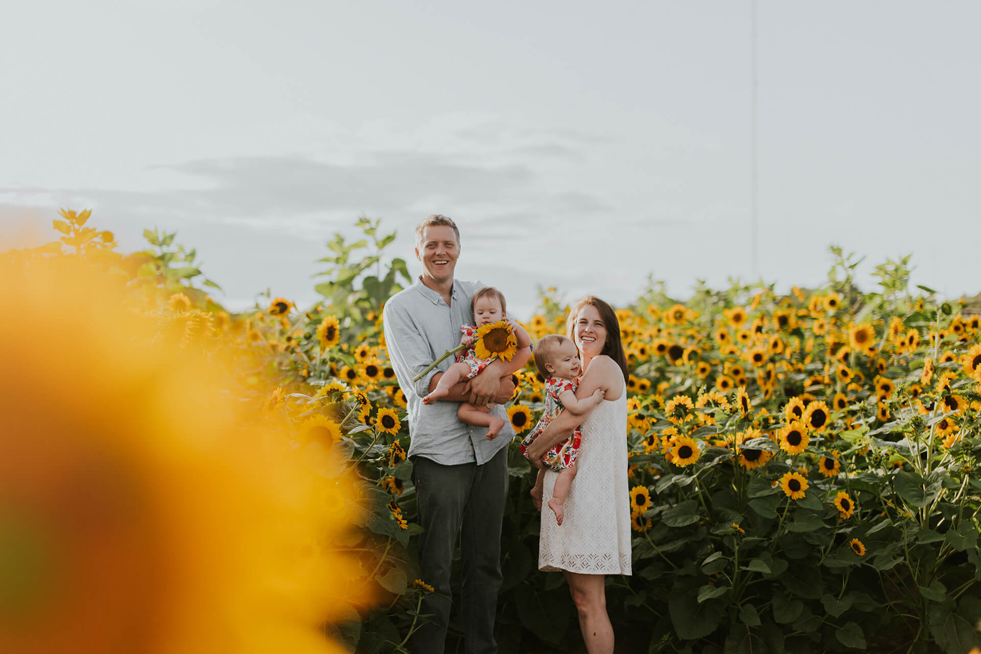 Beautiful new family photograph in a field of sunflowers in Yellow Springs, Ohio