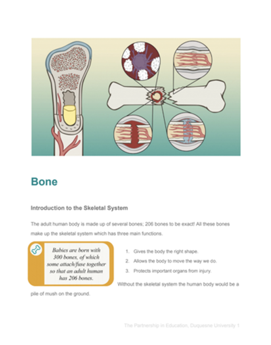 Bone Student Reading Pages