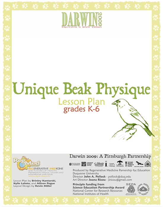 Unique Beak Physique Lesson Plan