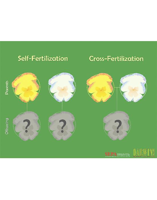 Flower Inheritance Activity Guide