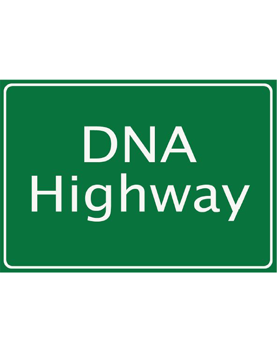 DNA Highway Repair Activity Guide