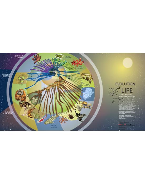 Spiral of Life III: Animal Evolution
