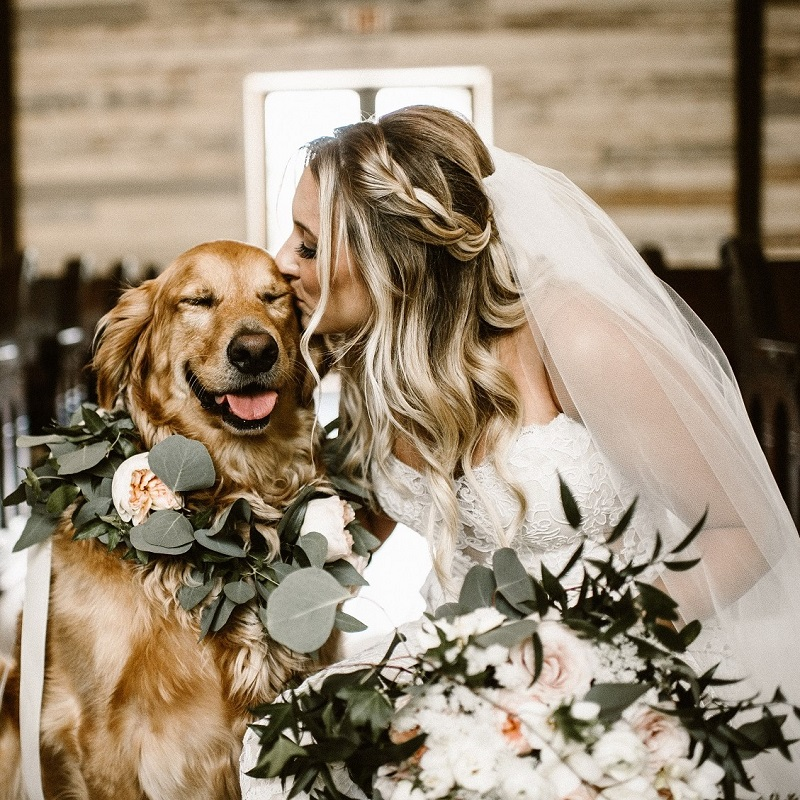 The bride and her golden retriever.
